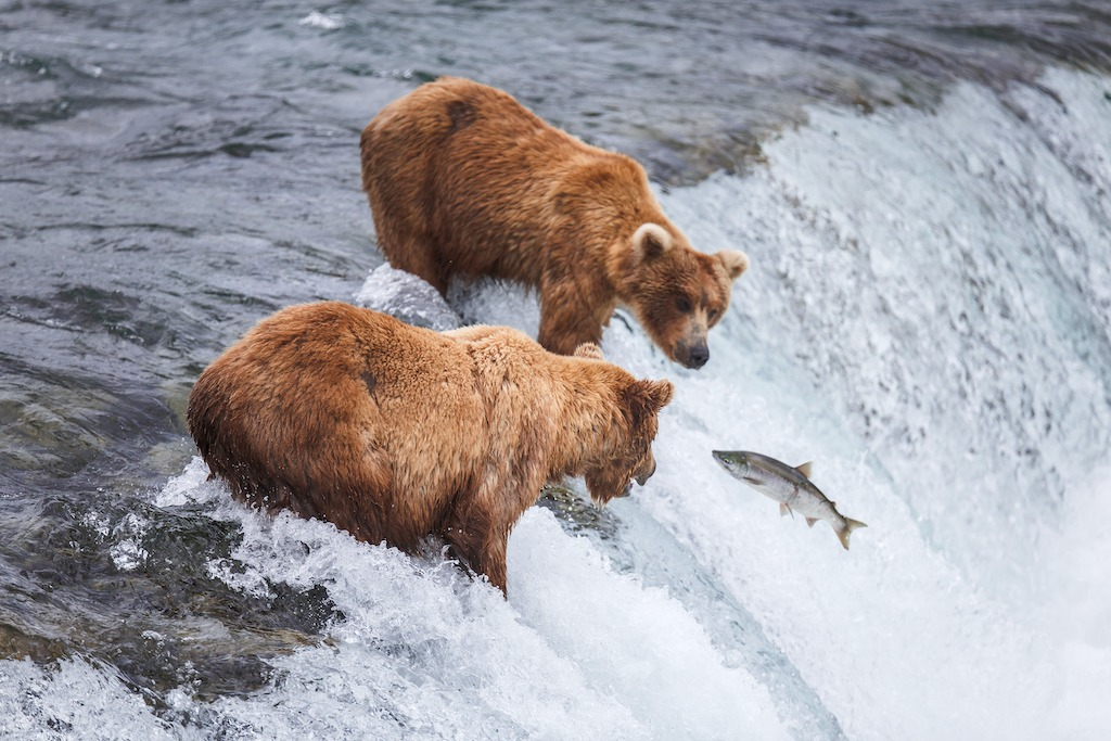 best time to visit alaska to go hunting